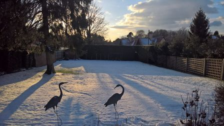 Recent snow scene in our back garden, Ipswich. Picture: RUSSELL LEEBURN