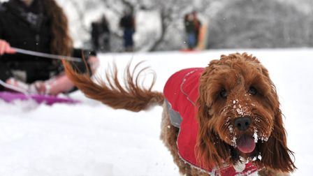 Lola having fun in the fresh snow. Picture: SARAH LUCY BROWN