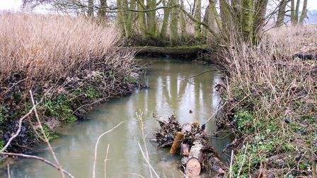 Part of the restored section of the River Wang, near Southwold. Picture: EMMA DIXON/WATER MANAGEMENT