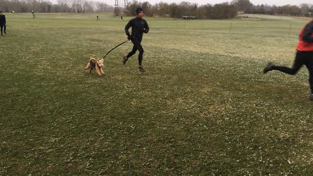 One man and his dog: canine action from last Saturday's Colney Lane parkrun, held at UEA in Norwich