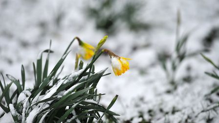 Snow could return for Easter. Picture: SARAH LUCY BROWN