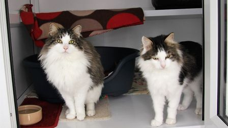 Sooty and Sweep can't wait to find a new home together
