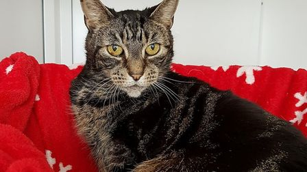Do you have a nice quiet home for Cat the cat?