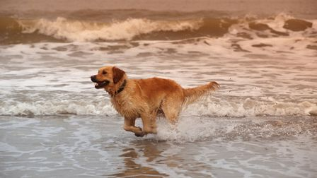 Dogs could be banned from a larger stretch of Felixstowe beach (stock image). Picture: GETTY IMAGES/