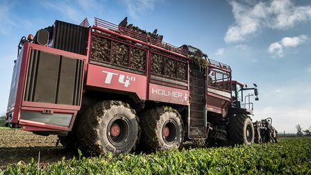 British sugar beet collected in the field before delivery to the factory. Picture: JAMES LINSELL-CL