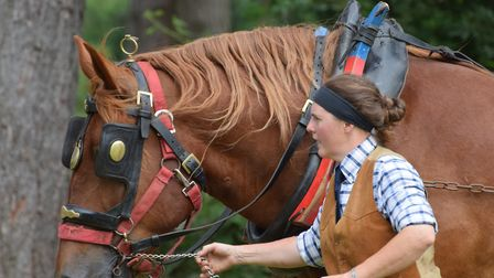 A Suffolk Punch horse display at 2016's Marks Hall Garden and Country Show. Picture: ANDREW MUTIMER