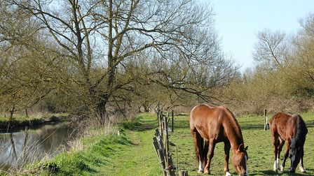 Spring by the River Gipping. Picture: ALAN BALDRY