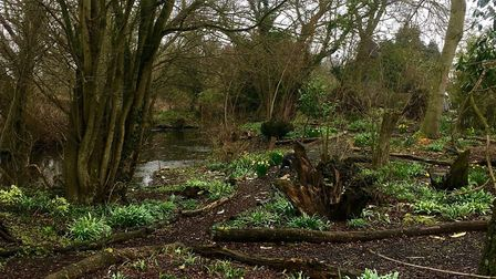 A woodland garden in Stoven. Picture: SUE RUSACK