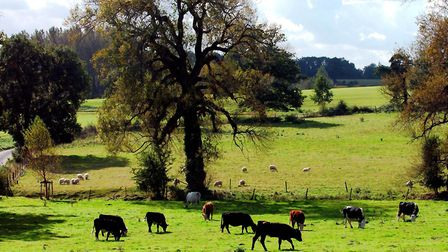 Several rural areas of Suffolk featured in the survey. Picture JOHN KERR