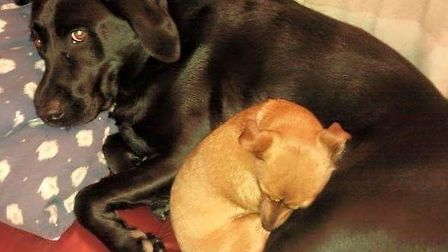 Poppy and Monty cuddled up together in bed. Picture: TERESA MERIFIELD
