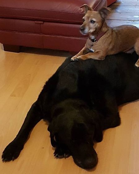 Poppy loved to sit on the back of her friend, Monty. Picture: TERESA MERIFIELD