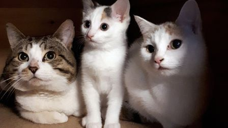 Blakey, Olive and Mildred who were abandoned on a London bus are looking for a new home. Picture: SE