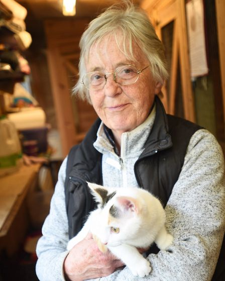 SESAW animal charity have three cats which were abandoned on a London bus. Centre owner Maggie Jacka