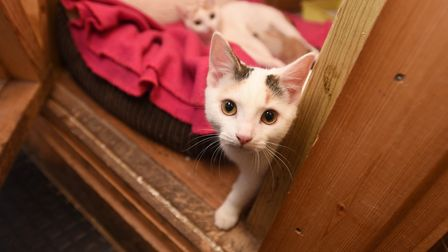 SESAW animal charity have three cats which were abandoned on a London bus. Picture: GREGG BROWN