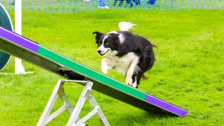 Festival of Dogs fun at the Framlingham Country Show. Picture: MARK TURNBULL PHOTOGRAPHY