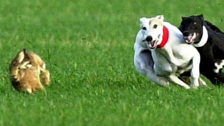 The survey seeks views on rural crimes such as hare coursing. Picture: CONTRIBUTED