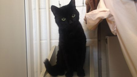 Could you give Sooty a new home?