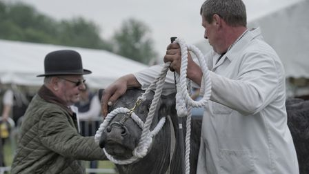 An entry in the cattle section at the South Suffolk Show held at Ampton Racecourse near Ingham. Pict
