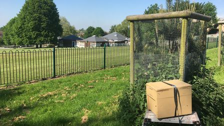 The bees will eventually be rehomed with Mr Thomas' other hives in Dedham. Picture: DANIEL THOMAS