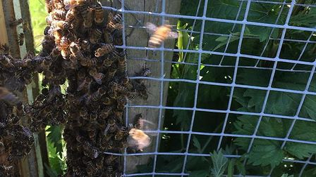 Mr Thomas was alerted to the problem when a concerned parent said she had spotted a swarm at St Mary