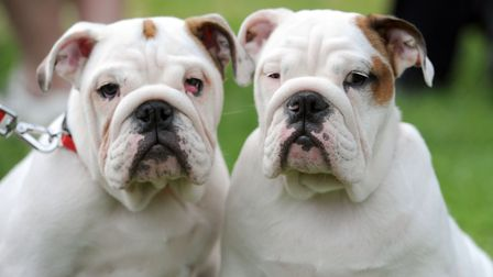 The St Nicholas Hospice 'Paws in the Park' event is taking place this weekend. Ivy (left) and Violet