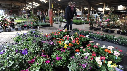 The Giant Plant Sale is at Trinity Park this weekend Picture: PHIL MORLEY