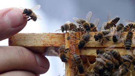 16 Beehives have been stolen in Braintree Picture: LEWIS WHYLD/PA WIRE