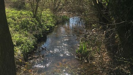 A stream near Hollesley. Picture: SUE RUSACK