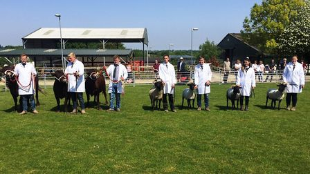 The Easton and Otley show team prepares for Suffolk Show. Picture: JOHN NICE