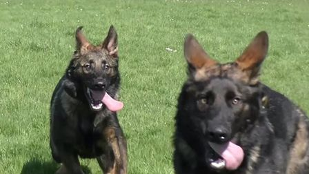 Maverick and Goose. Picture: ESSEX POLICE