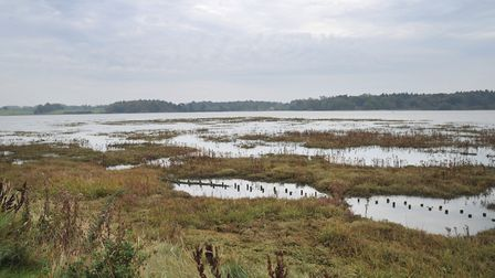 Dr Bury wants his students to study the Deben saltmarshes Picture: SARAH LUCY BROWN