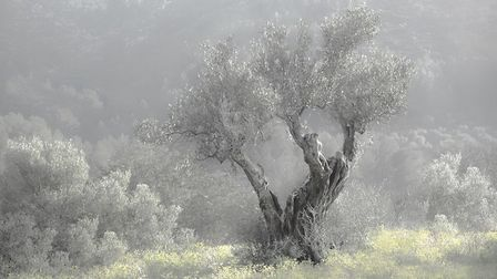Brian Gibbs' Lone Olive. The work will be on view at the East Anglian Federation of Photographic Soc