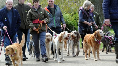 Last year's Great British Dog Walk in aid of Hearing Dogs for Deaf People at Ickworth Park. PICTUR