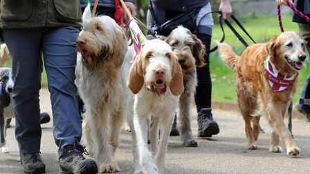Last year's Great British Dog Walk in aid of Hearing Dogs for Deaf People at Ickworth Park. PICTURE