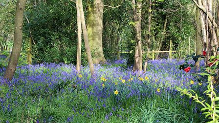 A special open gardens event is taking place this weekend at Blakenham Woodland Garden. Picture: GRA