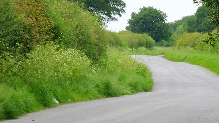 A country lane lined with Cow Parsley. Picture: PETER BASH