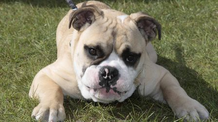 All About Dogs Show is happening this weekend Picture: NIGEL BROWN