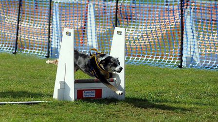 The Robin Hood Game and Country Show and All About Dogs show at Trinity Park in Ipswich Picture: PHI