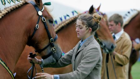 Suffolk Show 2016. Suffolk Punch judging in the Presidents' Ring Picture: SIMON PARKER