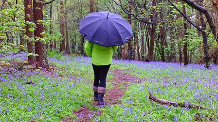 Winner: Great walk in Orwell Country Park Picture: STEPHEN SQUIRRELL