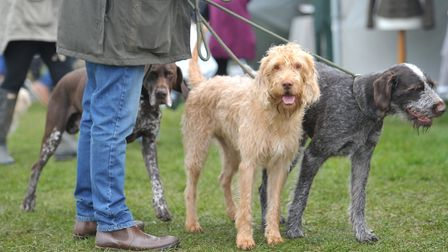 A charity dog fun run is taking place at the Elveden Estate in July Picture: SARAH LUCY BROWN
