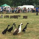 Dog and Duck show at Suffolk Show Picture: MEGAN ALDOUS
