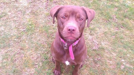 The bouncy Beau is looking forward to finding her new home