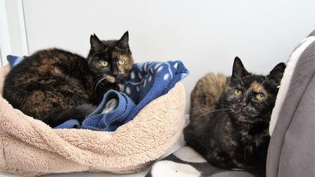 This sweet pair can't wait to find a nice new home to relax in