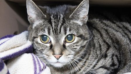 Do you have the perfect home to offer this lovely lady?