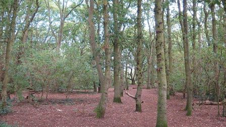 Parth of Purdis Heath, heath and woodland, is for sale with Fenn Wright, with a guide price in exess