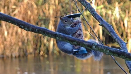 Taken on a lovely walk at Lackford lakes. Picture: STEPHEN SQUIRRELL