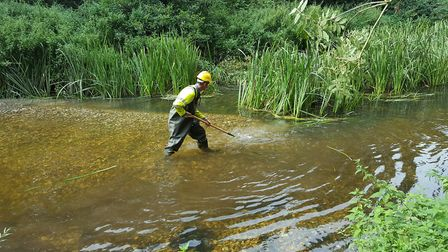 Conservation worker in river