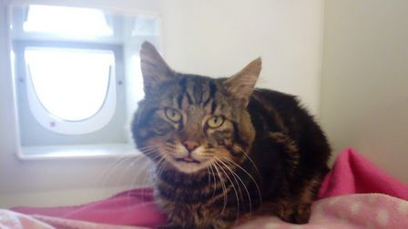 The male cat, who has now been nicknamed Ford by RSPCA staff, was trapped in the air vent of a silve