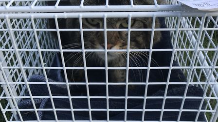 RSPCA inspectors helped him to safety and he is now being looked after Picture: RSPCA